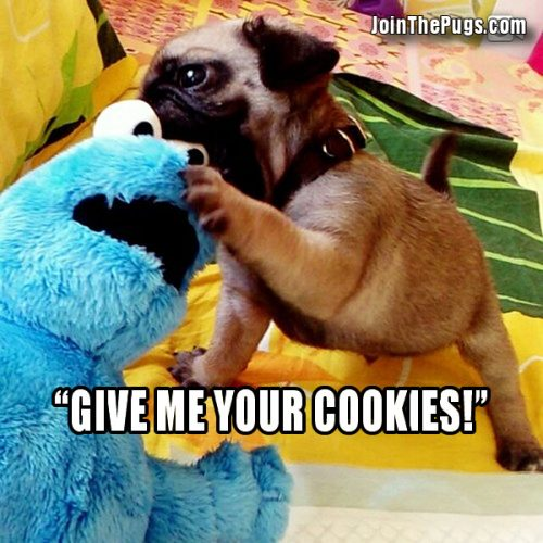 Cookie Monster vs Pug