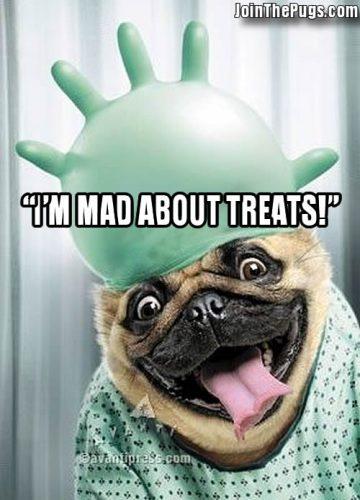 Pug Gone Mad