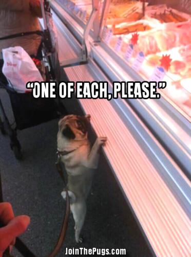 Pug favorite place