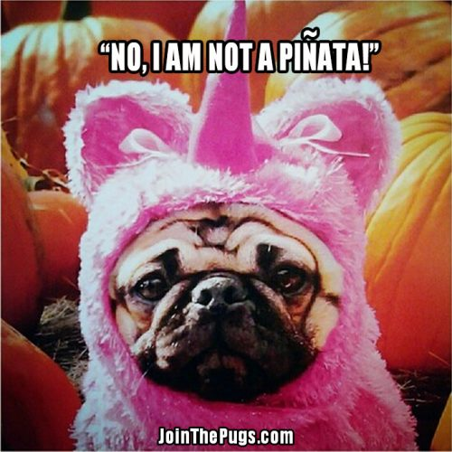 Best Pugoween Costume  - Join the Pugs