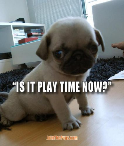 Is it playtime now - Join the Pugs
