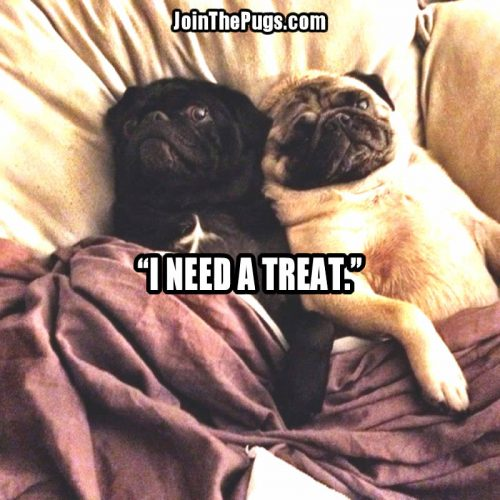 I NEED A TREAT - Join the Pugs