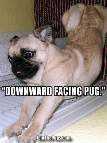 Yoga Pug - Join the Pugs