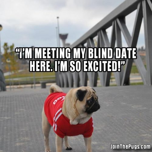 Blind Dating Pug - Join the Pugs