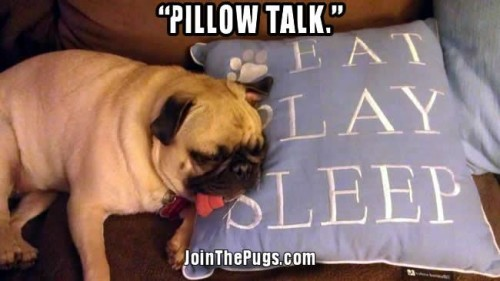 A Pug's Mantra  - Join the Pugs