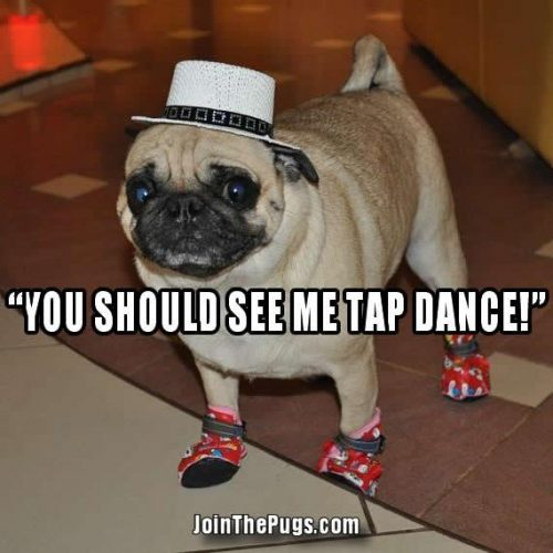 You should see me tap dance - Join the Pugs