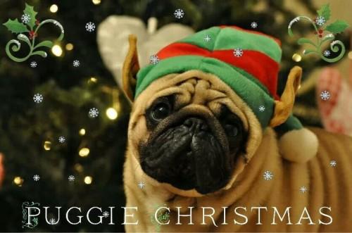 Christmas Pug-Elf - Join the Pugs