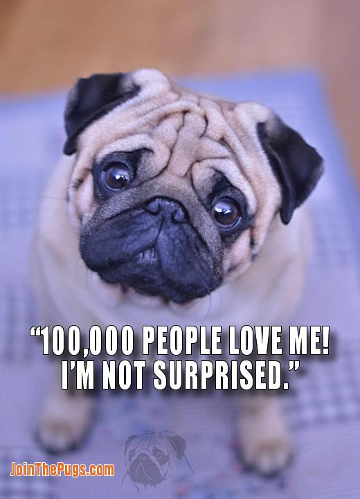 100,000 Pug lovers on Facebook