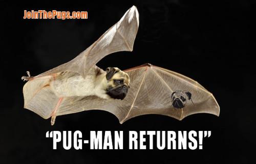 Pug-Man