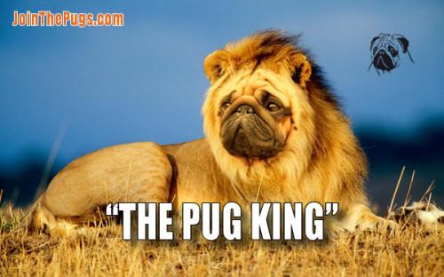 The Pug King