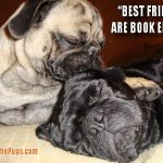 Best Friends are Book Ends