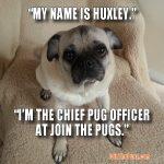 Huxley the CPO
