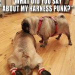 Pugs Take No Guff