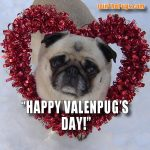 Happy ValenPug's Day