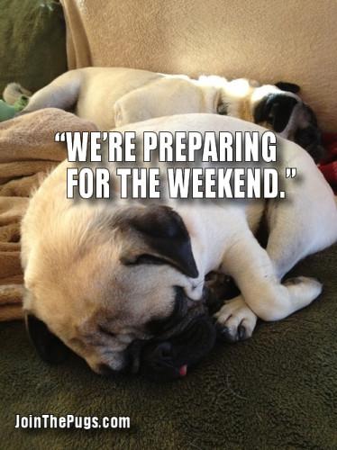 Weekend Pugs