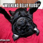 Weekend Belly Scratch