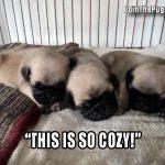 Cozy Pugs