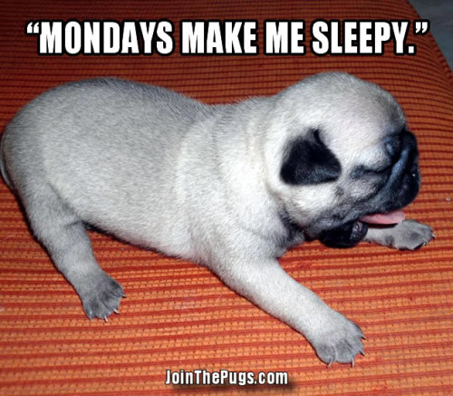 Mondays Make Me Sleepy