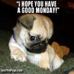 Happy Monday Says Pug