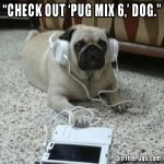Pug Mix DJ