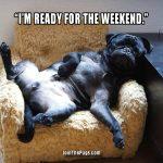 Pug is weekend ready