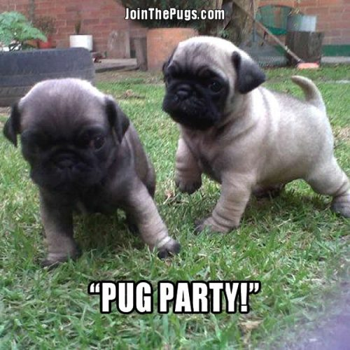 Pug Party - Join the Pugs