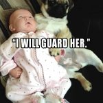 Pug Promises to Guard Baby