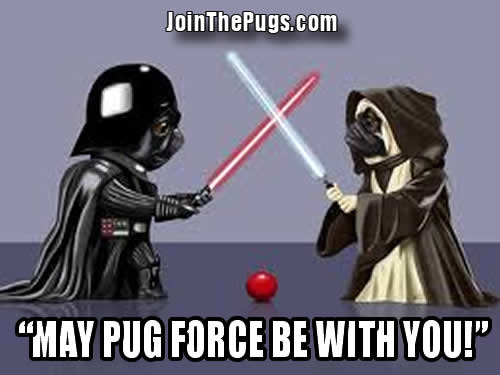 Star Pugs - The Force is Strong with This Pug