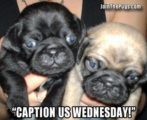 caption us wednesday