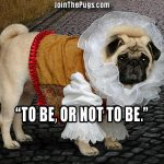 Shakespeare Pug