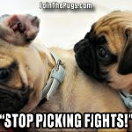 Pacifist Pug