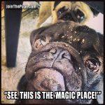Pixie Dust Pug