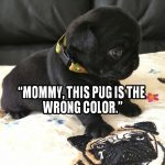 Pug-Believes-in-Equality