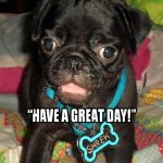 Pug Special Message