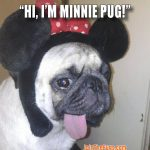 Akshi Tandon - Minnie Mouse Pug