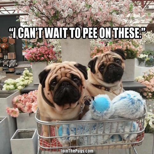 Garden Pugs