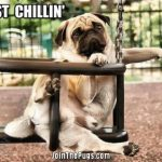 Just Chillin' - Pug Style