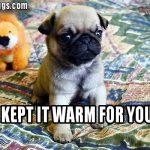 Keeping It Warm Pug