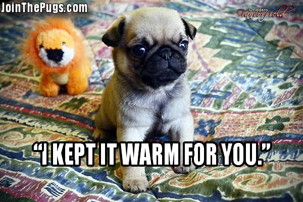 Keeping It Warm Join The Pugs
