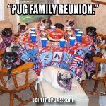 Pug Family Reunion