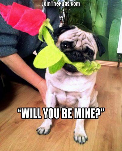 Pugs are Romantics