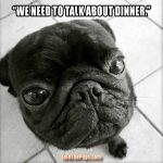 Serious Pug Talk