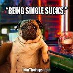 Single Pug