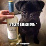The Wine Connoisseur Pug