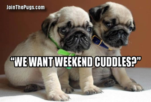 do we get weekend cuddles