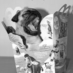 Happy Meal Pug