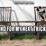 Pug Trick