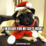Christmas Treats Pug