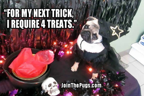 Witch Pug - Join the Pugs