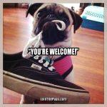 Little Helper Pug